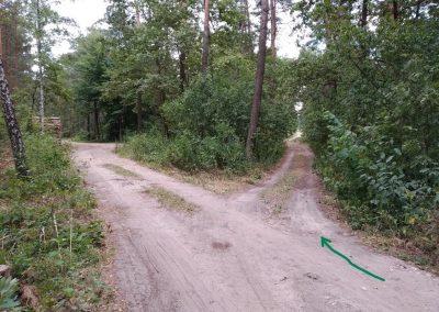 las Biernacice Światonia szlak