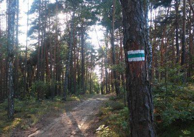 Szlak pieszy Bitwy nad Bzurą_Centralny Łuk Turystyczny
